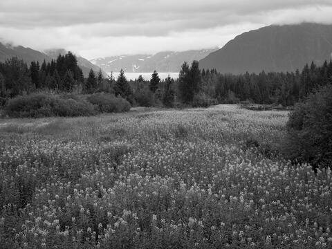 North America, United States, United States of America, Alaska, landscape